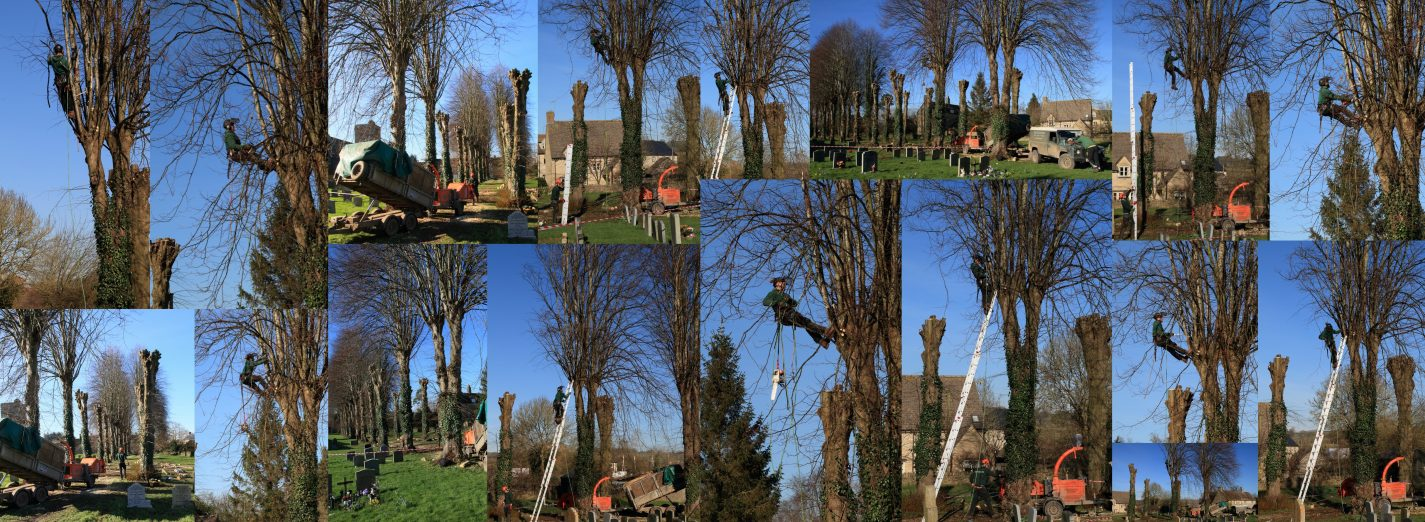 Church Tree Pollarding February 2016 (Stuart Fox)