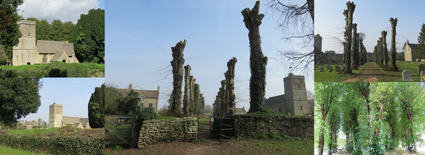 Ascott Church Trees Before and After (Elaine Byles)