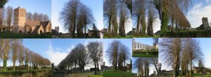 Ascott Church Trees January 2016 (Elaine Byles)