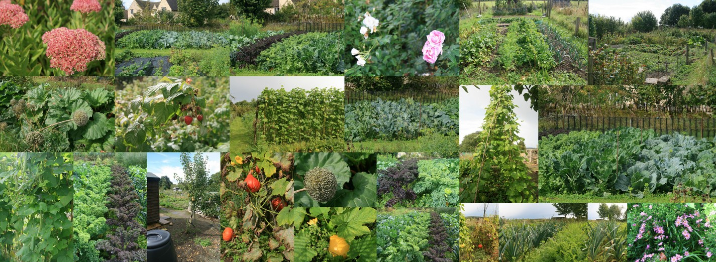 Ascott Allotments September 2017